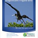 frigatebird homeschool giveaway