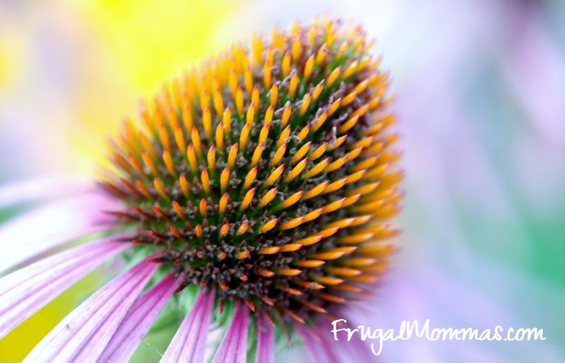 frugal mommas flower
